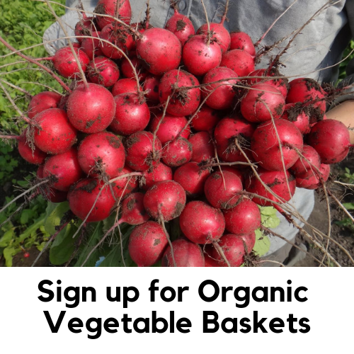 Sign up for Organic Vegetable Baskets